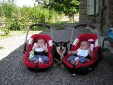 Mirabelle e i cuccioli
