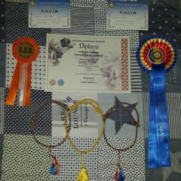 Diplomi e Premi